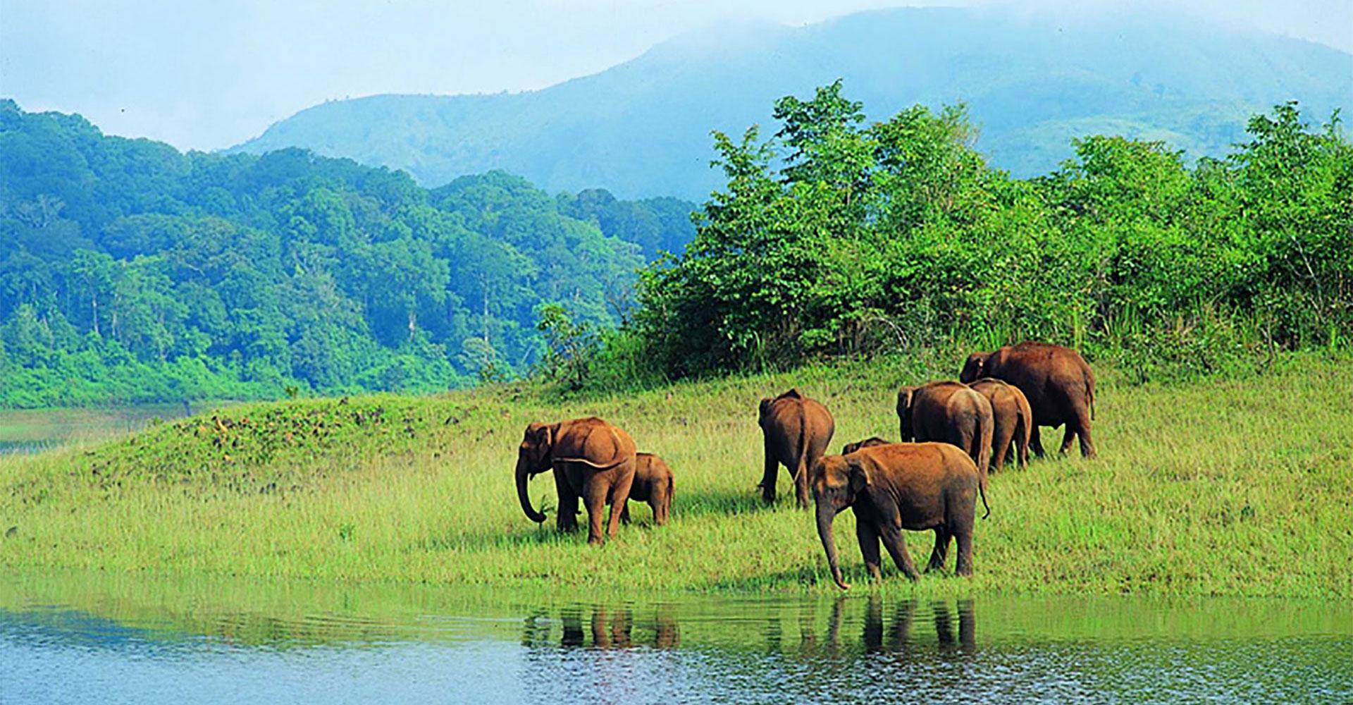 Wildlife Tour – South India